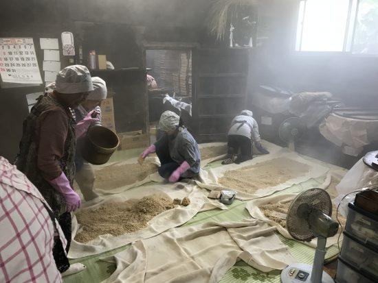 麦糀の仕込み